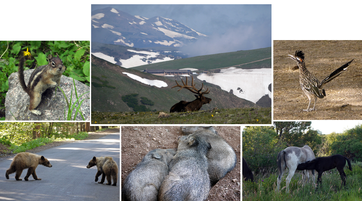 Animals from various national parks